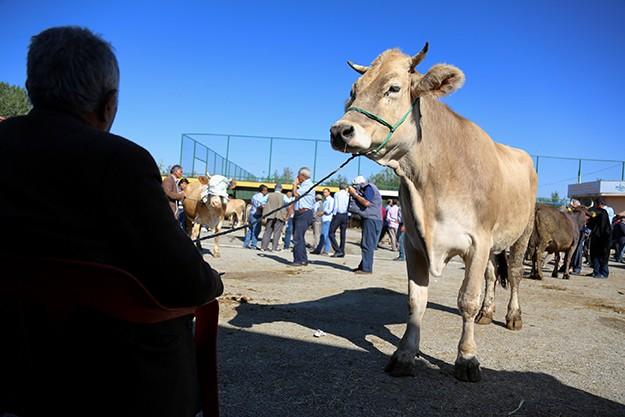 Hayvan pazarında kurban hareketliliği