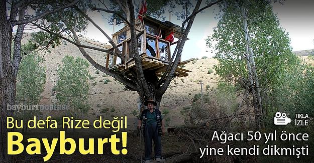 50 yıl önce diktiği ağaca ev yaptı