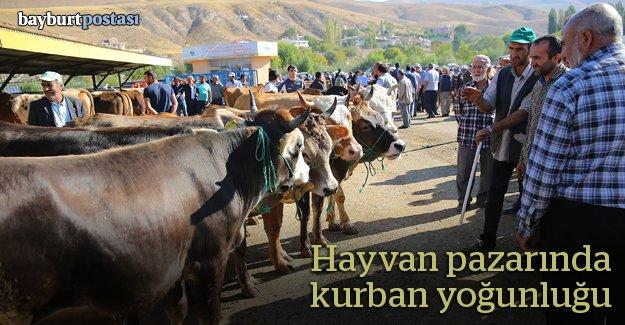 Hayvan pazarında 'Kurban Bayramı' bereketi