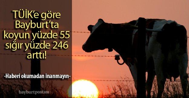 Bayburt'un 2015 yılı hayvancılık verileri açıklandı