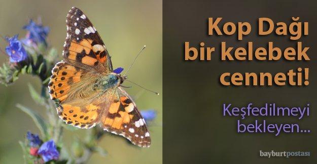 Kelebek zengini Bayburt keşfedilmeyi bekliyor