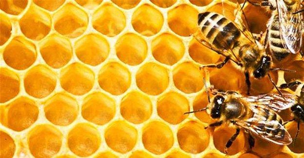 Arıcılara organik balmumu desteği