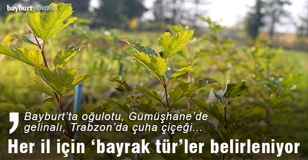 Karadeniz tıbbi ve aromatik bitki cenneti olacak