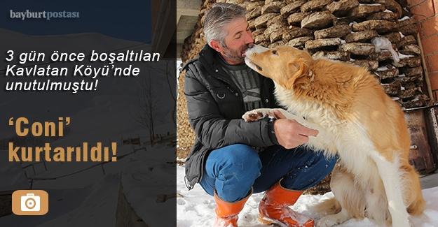 Kavlatan'da mahsur kalan köpek kurtarıldı