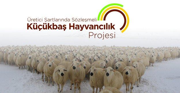 '300 Koyun' projesi başvuruları başladı