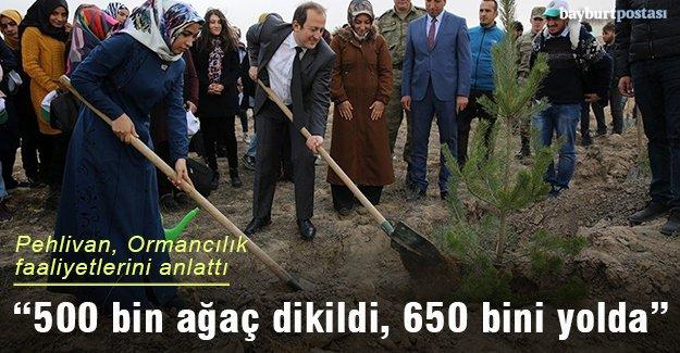 Vali Pehlivan, ormancılık faaliyetlerini anlattı