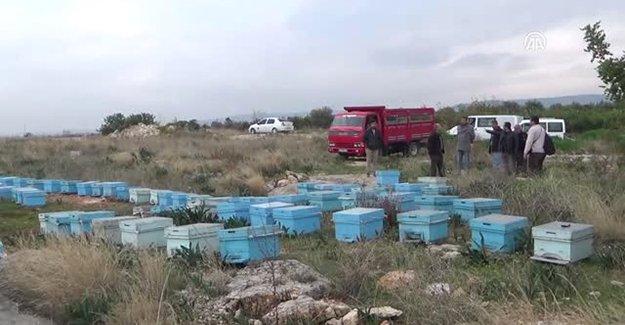 Bayburt'ta arı kovanı hırsızlığı iddiası