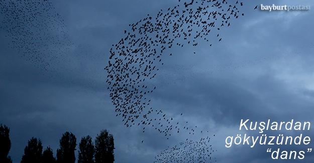 Bayburt semalarında kuş dansı