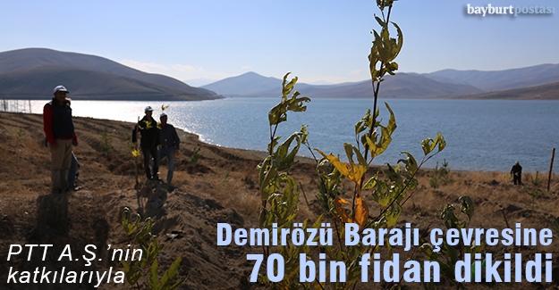 Demirözü Barajı ağaçlandırıldı