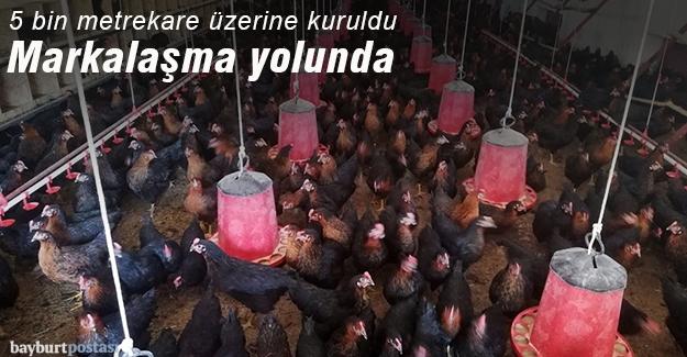 Tavukçuluk işletmesi markalaşma yolunda
