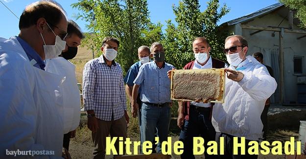 Kitre'de Bal sağımına başlandı