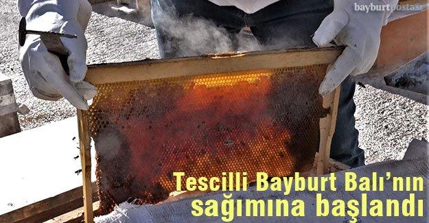 Bayburt Üniversitesi'nce tescillenen 'Bayburt Balı'nın Sağımına Başlandı