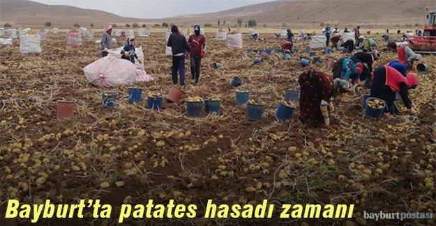 Bayburt'ta patates hasadı zamanı