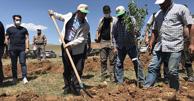 Oruçbeyli'de 30 dönümlük alana meyve ağacı dikildi