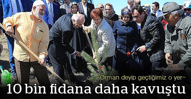 Bayburt#039;ta quot;Bereket Ormanlarıquot; projesi