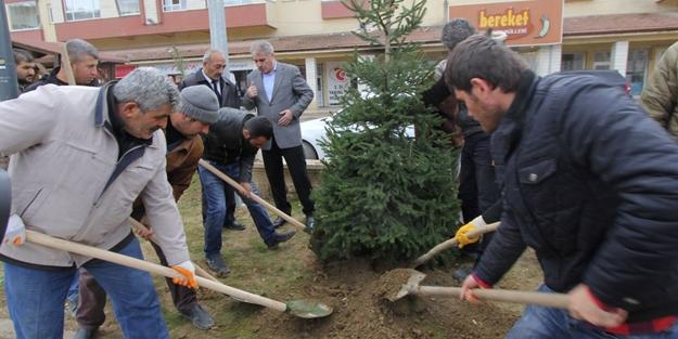 Belediyeden ağaç mesaisi