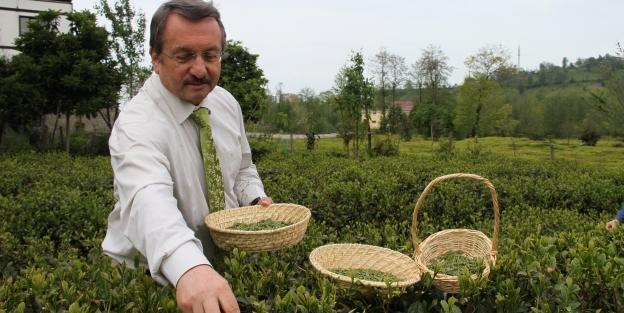 Bu çayın kilosu 300 lira!