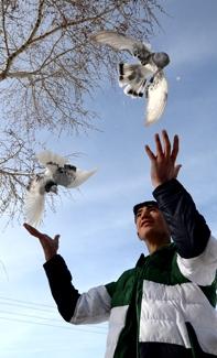 Taklacı güvercinlere soğuk havada idman