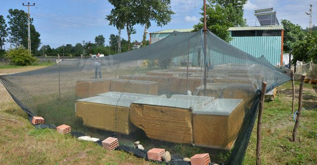 Eski buzdolaplarından balık havuzu yaptı