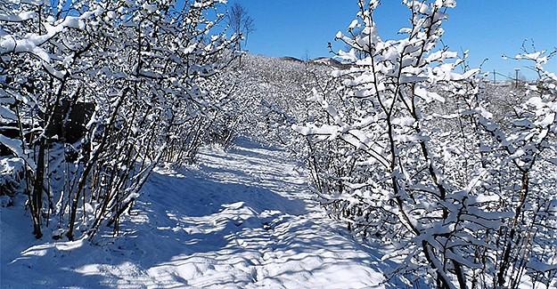 Nisan ayında yağan kar fındık üreticisini korkuttu