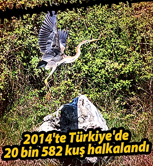 2014'te Türkiye'de 20 bin 582 kuş halkalandı