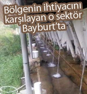Bayburt'tan Gürcistan'a alabalık ihracatı