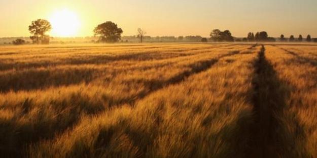 Özbek, çiftçiyi uyardı: Son tarih 24 Aralık