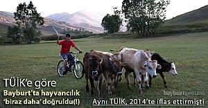 TÜİK'e göre, Bayburt'ta hayvancılık doğruldu!