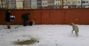 Ülkü Ocakları'ndan 'hayvan barınağı' çalışması