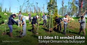 81 ilden sembol fidan Türkiye Ormanı'nda buluşuyor