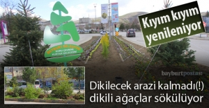 Orta refüjlerdeki ağaç kesimine tepki