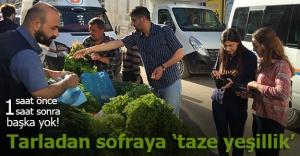 Tarladan sofraya 'taze yeşillik'
