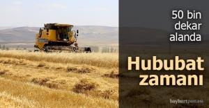 Bayburt'ta hububat hasadına başlandı