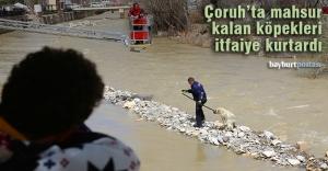 Çoruh Nehri'ne düşen köpekleri itfaiye kurtardı