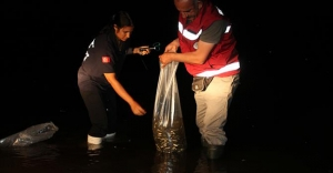 Göletlerde balıklandırma çalışmaları