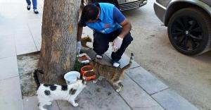 Sokak hayvanları ve yaban hayatı unutulmadı