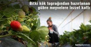 Bayburt Üniversitesi'nden meyvelere lezzet katan çalışma