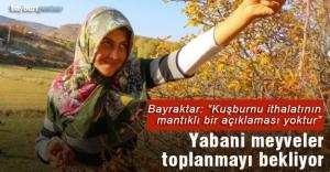 Anadolu'nun yabani meyveleri toplanmayı bekliyor
