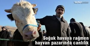 Bayburt'ta hayvan pazarında canlılık