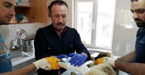 Bayburt Belediyesi sokak hayvanlarının bakımını yapıyor