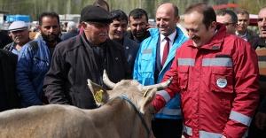 Vali Pehlivan, hayvan pazarında incelemelerde bulundu