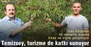 Gez Köyü'nde 40 dekar alanda kiraz ve vişne yetiştiriyor