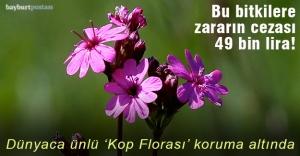 'Kop Florası'na zararın cezası 49 bin lira