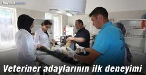 Stajyer öğrenciler ilk defa ameliyat...