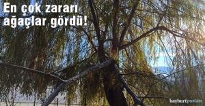 En çok zararı ağaçlar gördü!