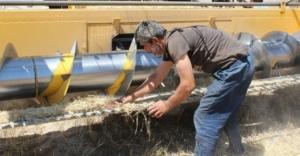 Kuraklık, buğday verimini yüzde 60 düşürdü