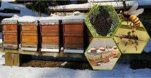 Arıcılara kış bakımı uyarısı