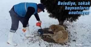 Belediye, sokak hayvanlarına yiyecek bıraktı