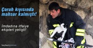 Çoruh Nehri'nde mahsur kalan kediyi itfaiye ekipleri kurtardı