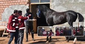 Cirit atlarına 'Ruam Testi' yapıldı